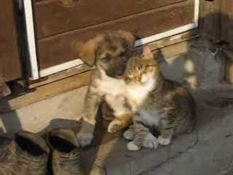 Cat and dog...Best friends for ever... Video