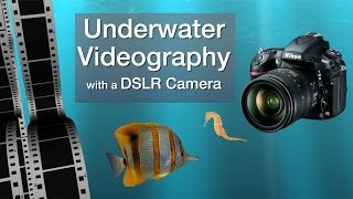 Underwater Videography with a DSLR Camera