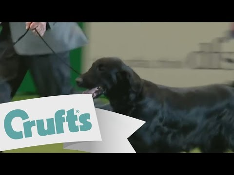 dfs Crufts 2011  - Best in Show
