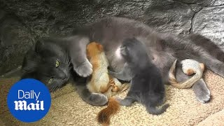 Cat adopts four baby squirrels at local park in Crimea