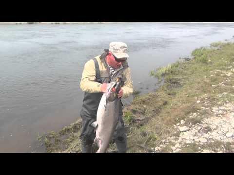 Рыбалка на Камчатке Ловля чавычи Июнь 2013