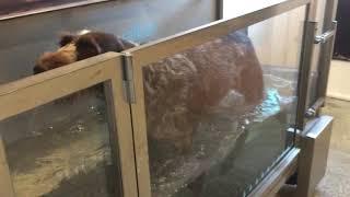 Sunday training in the underwater treadmill