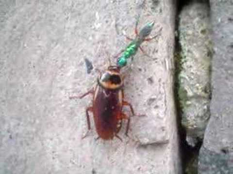 WASP vs. COCKROACH