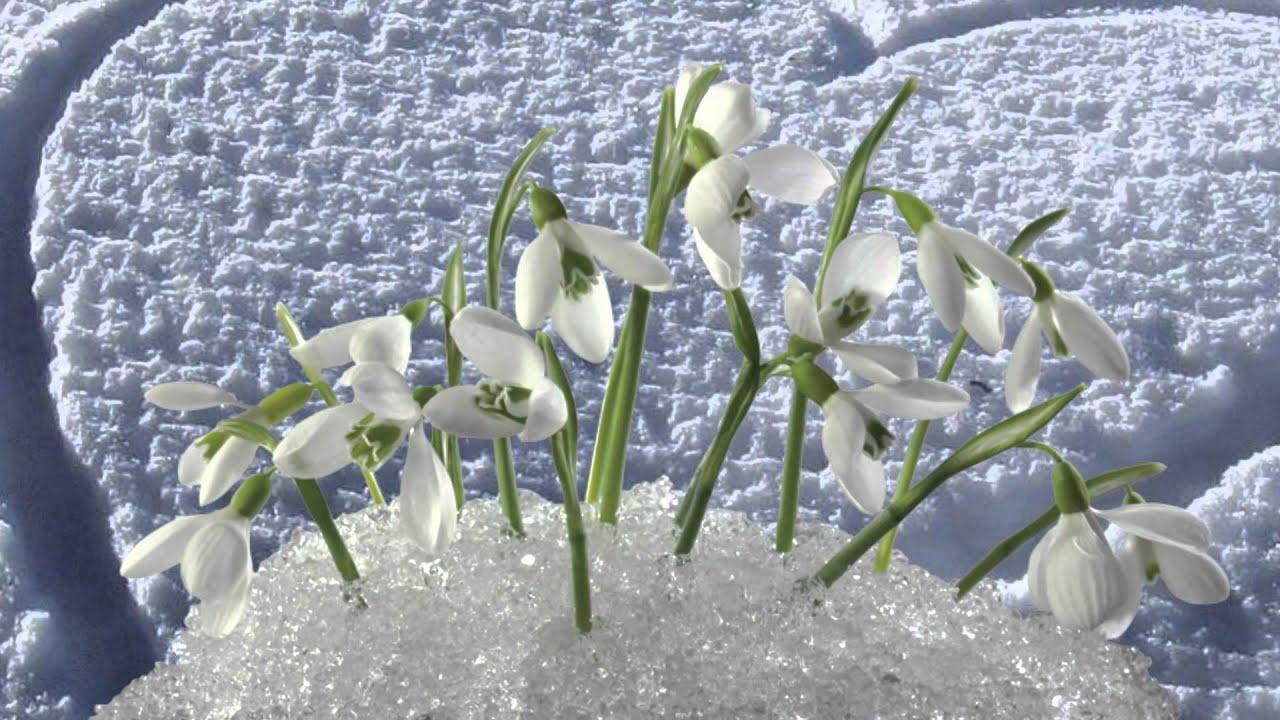 скачать больше не хочу весна: