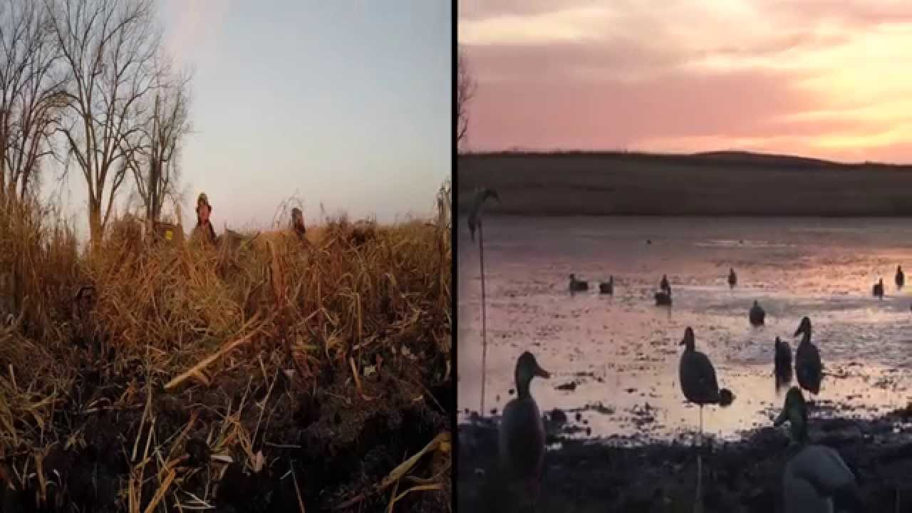 North Dakota Duck Hunting Twm 14 Youtube
