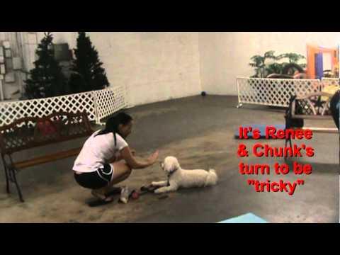 Villa La Paws Puppy Obedience Graduates: 10/24/11