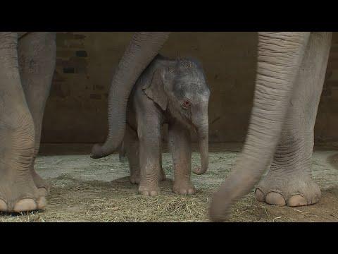 Elefantenbaby geboren