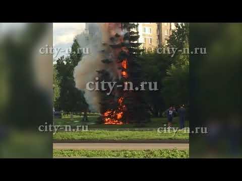 В Новокузнецке вандалы сожгли живую ёлку под окнами Следственного комитета