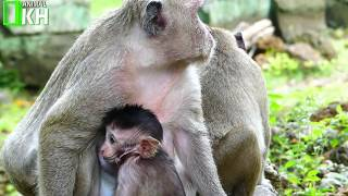 Sweet Pea Play Request Small Monkey Until Successful,SP Like Play Request With Small Monkey