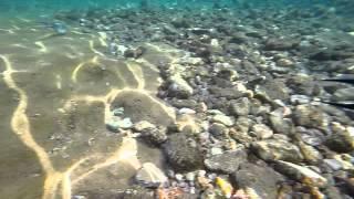 Самый прикольные рыбы которые были в Египте
