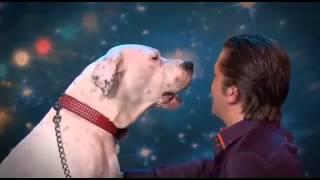 كلبة تغني!