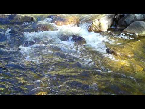 Trout in Eldorado Canyon - Middle Section