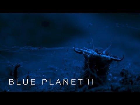 Beware the Bobbit worm - Blue Planet II: Episode 3 - BBC One