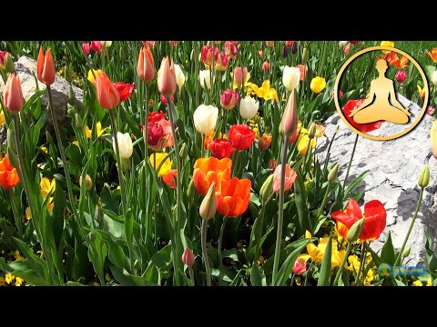 HDTV relaxing nature - tulips flowers - birds chirp sing - FULL HD 1080p