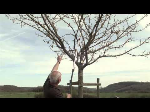 Obstbaum Richtig Schneiden - Obstbaumschnitt, Pflegeschnitt 10- Bis 15-jähriger Baum