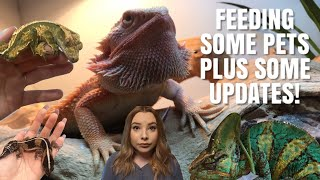 Feeding My Pets! + Reptile Room Updates!