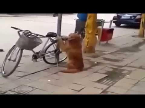 Этот пёс# взорвал ютуб#!!! Смотрим что произойдёт когда придёт хозяин 360p