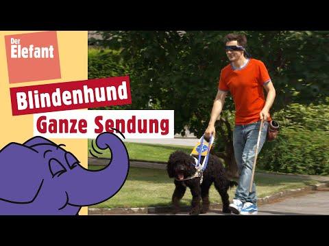 Die Sendung mit dem Elefanten - Folge 525 - Blindenhund | WDR