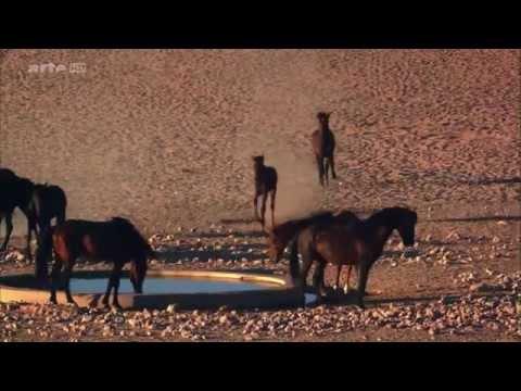 NATUR-DOKU: Afrikas  Wilder Westen  -  Die Namib (HD)