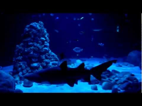 Rekin W Zoo W Warszawie