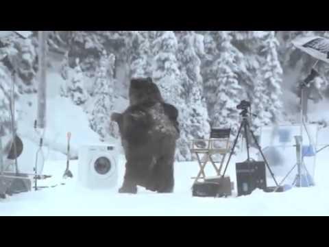 Неожиданный медведь. Самые разные смешные и прикольные ситуации