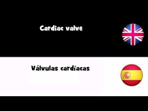 APRENDER INGLÉS = Válvulas cardíacas