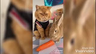 animal tik tok videos   Tik Tok Animals   Funny Cats and Dogs Videos