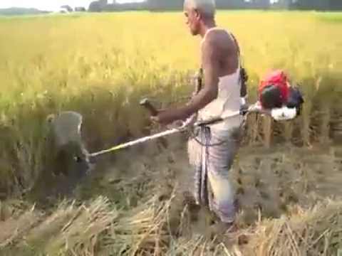 Cara Memanen Padi Dengan Mesin Pemotong Rumput