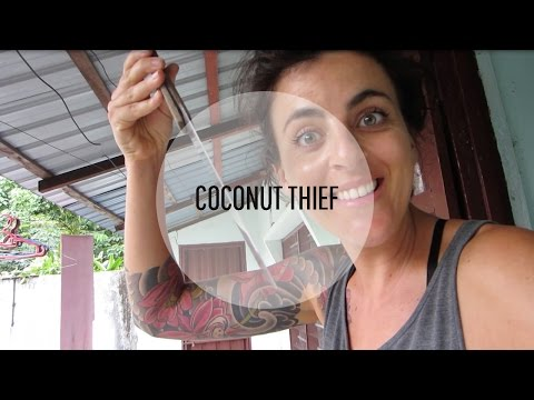 Coconut Thief!!!