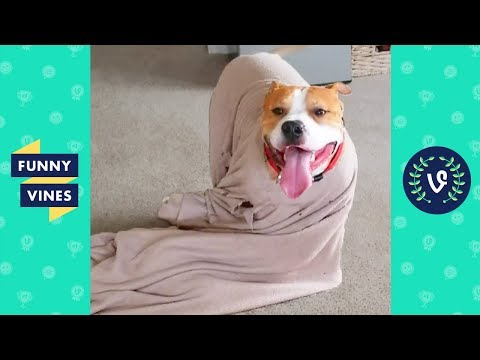 TRY NOT TO LAUGH - Best DOG FAIL Compilation | Funniest Pet Videos | Funny Vine May 2018