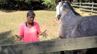 Scared Bullied Horse - Session with Energy Healer & Animal Communicator