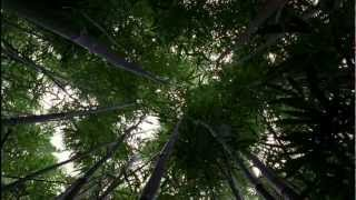 LOST: Opening Scene 1x01 - Bamboo Forest