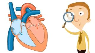 Human Heart for Kids | Body Function Facts Video