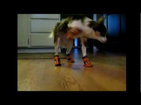 Psy w butach