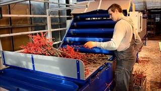 Ilex sorting-machine at the Groeneveld plantation