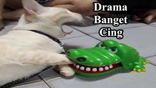 Si Kucing Lucu Digigit Buaya Mainan Ekspresinya Drama Banget