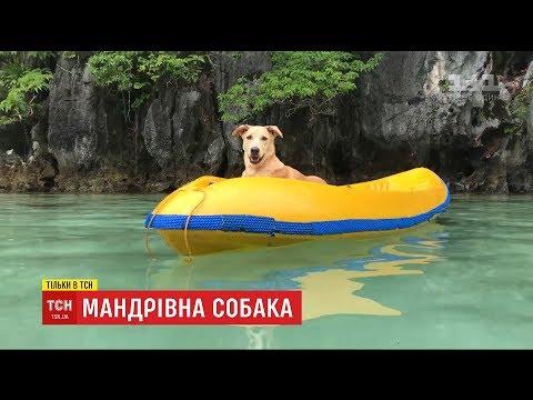 Песик облетів увесь світ та став популярним у Мережі після порятунку від смерті парою українців