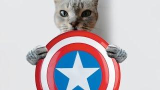 Parodia Los Vengadores 2 El Escudo Del Capitan America The Avengers