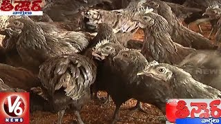 This Kadaknath Chicken Variety Costs Rs 1000 Per Kg And Rs 120 Each Egg | Teenmaar News