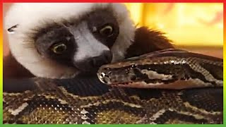 🐍 Zoboomafoo 201 | Snakebellies | Animal shows for kids | Full Episode | HD 🐍