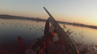 Eastern NC Duck Hunt 2016