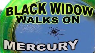 BLACK WIDOW Spider - Can it WALK on MERCURY? - SCIENCE!