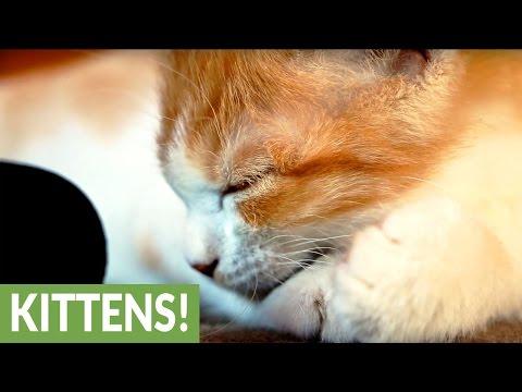 猫の喉を鳴らすゴロゴロ音の破壊力を改めて知るの巻♪