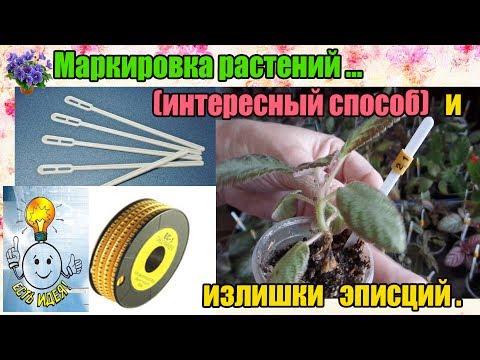 Маркировка комнатных растений с помощью кофейной палочки и кабельного маркера. Излишки эписций