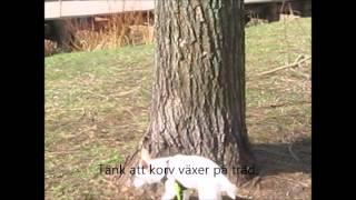 Storis tränar hundmöten