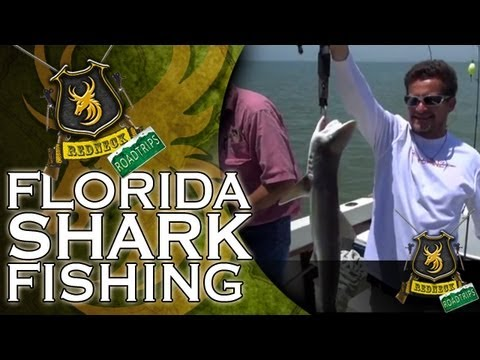 Florida Shark Fishing video