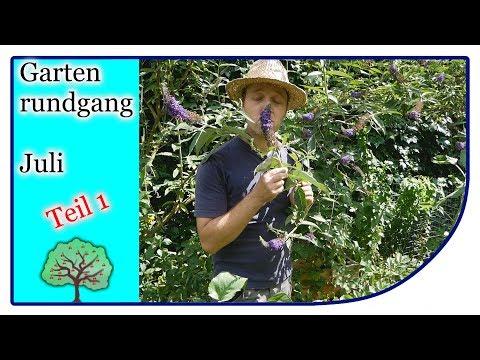 Der Garten im Juli   die Zwiebeln können geerntet werden   Gartenrundgang