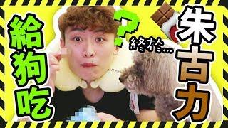 MUFFIN吃了狗生第一顆【朱古力】?!⚠觀眾寄禮物地址更改!