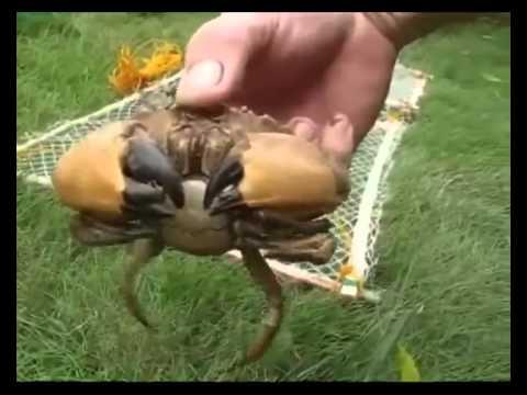 simple crab trap