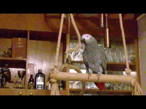 Говорящият папагал Джари - Джарко, папагалчо.... хайде лека нощ.... хайде чао! :-)